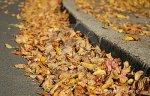 fall-leaves-street-gutter-1438259