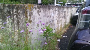 Flowers in the parking lot